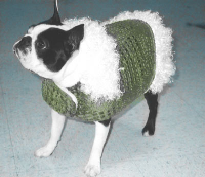 Boston Terrier fleece coat