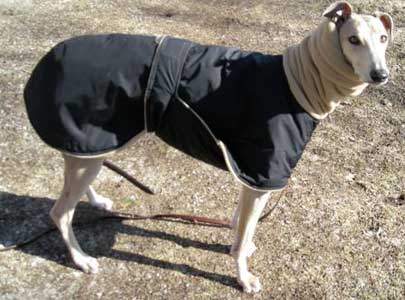 discount winter dog coat