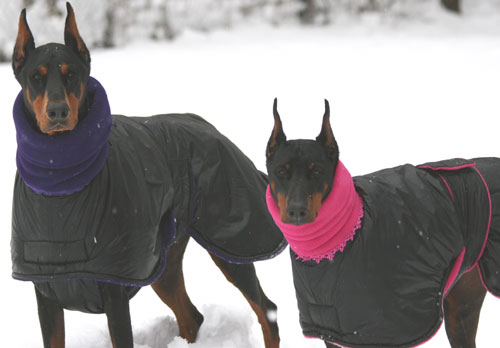 Jazz and Zarra Enjoying Their Warm Winter Dog Coats