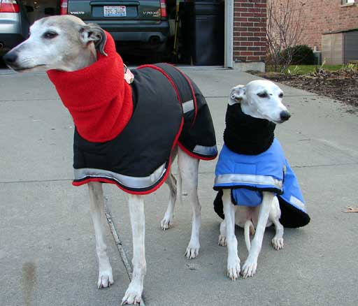 winter dog coat and raincoat - whippets