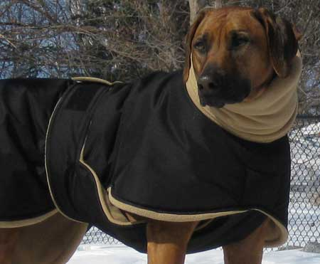 Rhodesian Ridgeback dog coat
