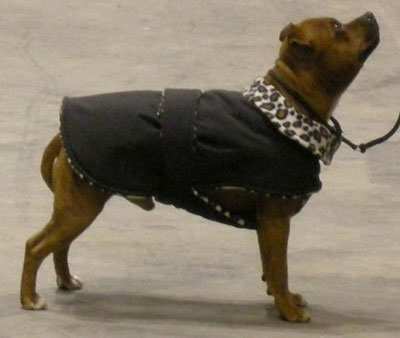 winter dog coat with leopard fleece