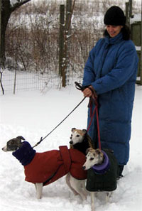 snow dog coats