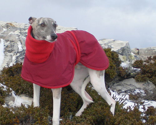 Nambe; Red whippet winter dog coat