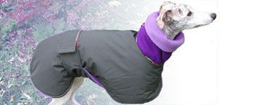 whippet in a cozy warm winter coat