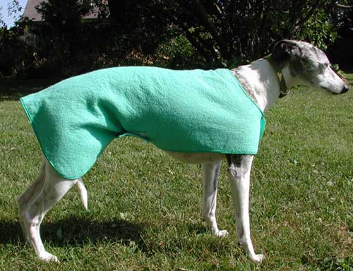 wet coat for dogs